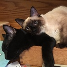 All About Kitties Premier Cat Sitting Service's Photo