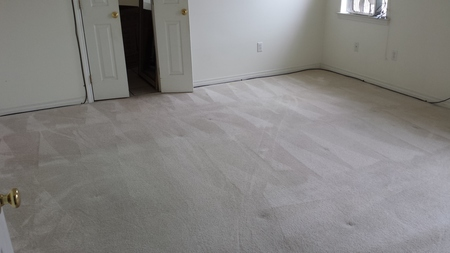 Sparky Carpet Cleaning Care Com Baton Rouge La House Cleaning