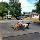 Really Great Dog Training's Photo