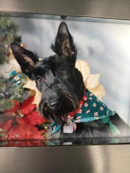 Lucky Dog Paws, LLC - Care com Columbia, MO
