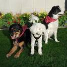 Premier Scottsdale Pet Care's Photo