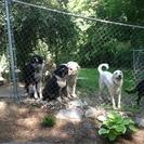 Auntie's Pet Club Doggie Doggie Day Care & Pet Hotel's Photo