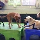 Fuzzy Buddy's Dog Daycare's Photo