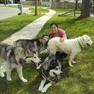 Oh Happy Dog!'s Photo