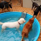 All About Dogs Boarding's Photo