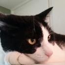 Cuddles & Care Pet Sitting Service, LLC's Photo