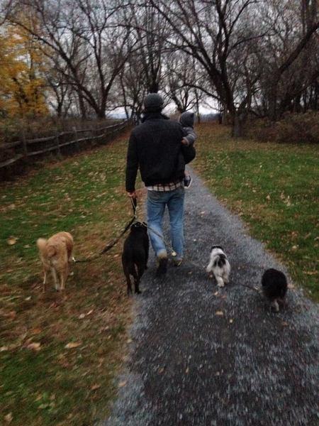 Lead Holistic Dog Training - Care com Hudson, NY