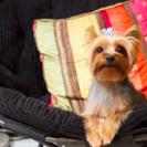 Marie's Pet Grooming's Photo