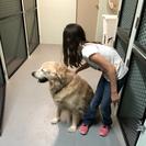 New Braunfels Pet Resort's Photo