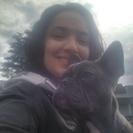 Seattle Dog Zen's Photo