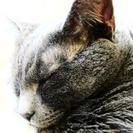 Cat Concierges of MD's Photo