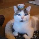 Catlover Pet Sitting's Photo