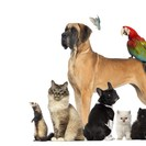 Pet Care of Metrowest's Photo