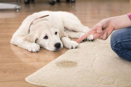 Aqualux Carpet Cleaning - Care.com Dallas, TX Generic