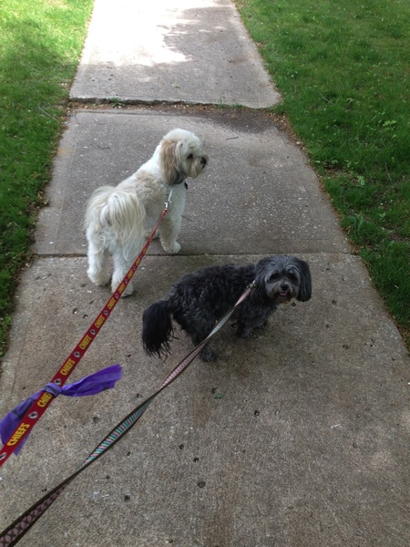 All Pawsitive Pet Care - Care com Kansas City, MO