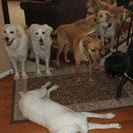 Pet Sitting in the Woods, LLC.'s Photo