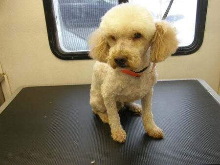 Sparkle Mobile Dog Grooming - Care com Long Beach, CA