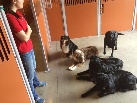 Dog Day Care Lawrenceville Ga