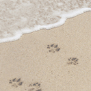 Paws On The Beach