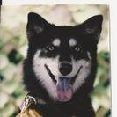 Dakota's Pet Services's Photo