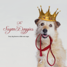 The Sugar Doggies's Photo