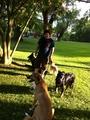 Alta Dog Walking & Pet Services's Photo