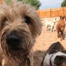 Got Woof? - Doggie Playground & Boarding's Photo