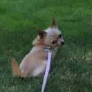 K9crazy Dog Training's Photo