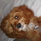 CAP Dog Walking & Pet Sitting, LLC's Photo