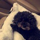 Glamish Pet Walks & Pet Sitting's Photo
