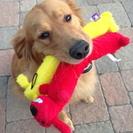 Coco & Boo Pet Concierge Plus's Photo
