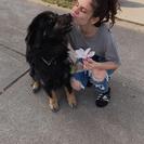 Dani's Dog Service's Photo