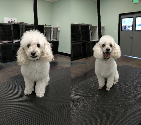 Spawlash pet grooming and selfwash llc care northglenn co full service grooming salon and self wash solutioingenieria Gallery