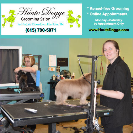 Haute dogge care franklin tn haute dogge grooming salon is a step above the rest providing a kennel free environment one on one personal service and fluff drying for lasting beauty solutioingenieria Choice Image