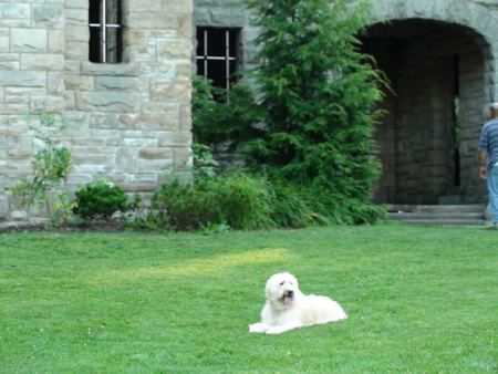 Lake County Dog Walkers Pet Sitting Services Carecom Mentor Oh