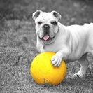 Paw Fanatic Pet Care's Photo