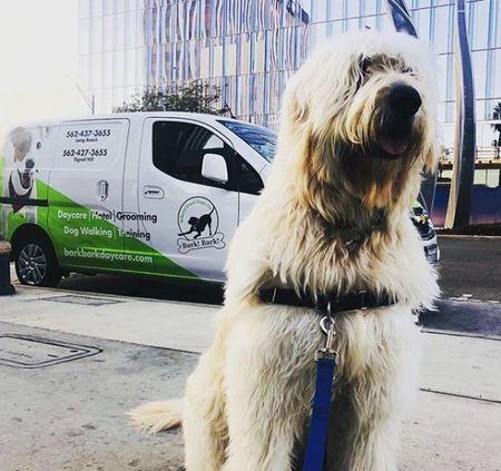 bark! bark! - Care com Long Beach, CA
