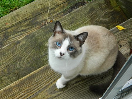 Sonyea Cat Services - Care com Dansville, NY