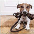 South Orange Pet Services, LLC's Photo