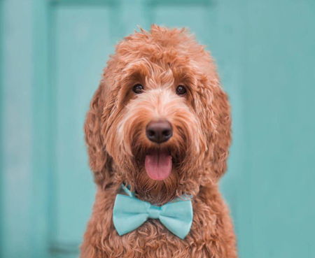 Pet paws self serve pet wash grooming salon care lexington ky about the business solutioingenieria Choice Image