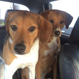 Photo for Sitter Needed For 3 Dogs In Charlotte