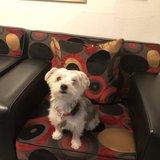 Photo for Seeking Dog Boarding Care