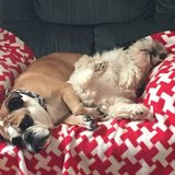 Photo for Sitter Needed For 3 Dogs, 3 Amphibians In Gulfport