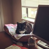 Photo for Sitter Needed For 1 Cat In New Port Richey