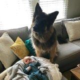 Photo for Babysitter Needed For 1 Child In Denver (recurring)