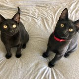 Photo for Two 1-year Old Cats