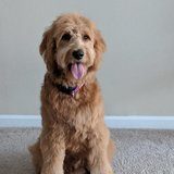 Photo for Looking For A Pet Sitter For 1 Dog In Belleville