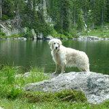 Photo for Dog Walker Needed For 1 Dog In Grand Junction