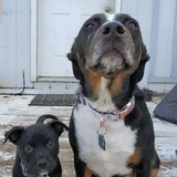 Photo for Dog Sitter