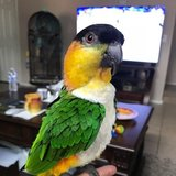 Photo for Sitter Needed For 1 Bird In Goodyear